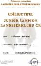 Csilla - Junior šampion LK