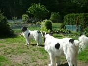 Zila - 9 měsíců a Ciggy