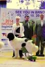 TOP DOG 2013 - FCI II - 1 místo